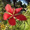 Brevard Botanical Garden