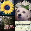 Flowers by Tammi