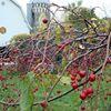Sweetland Orchard