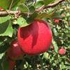 Ardrossan Batlow Apples