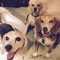 Northern California Animal Rescue Friends