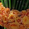 Barbara Vakassian Florals