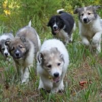 Blackdogs Rescue