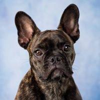 T & C Pet Photography
