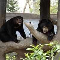 Edinburgh Zoo's Sun Bears