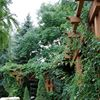 Stems Garden Design & Maintenance
