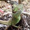 Cali_FID Parrot & Exotics Rescue Sanctuary