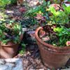 Karen's Green Garden Care