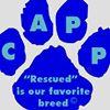 Companion Animal Placement Program