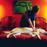 Indianapolis Dog Daycare