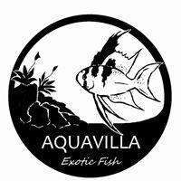 Aquavilla, exotic fish