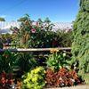 Gardenville Blooms
