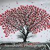 Newshoots Photography