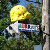 Murray's Homemade Ice Creams