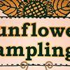 Sunflower Samplings