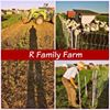 R family farm