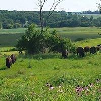 McHenry County Audubon