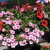 Price Nursery and Landscaping, Inc.