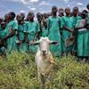 Give A Goat thumb
