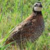 Kerr & Mason Mountain Wildlife Management Areas - Texas Parks and Wildlife