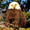 Eagle Academy Charter School - EACS