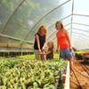 Porter Farms CSA