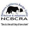 Northern California Border Collie Rescue & Adoptions