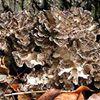 Delaware Highlands Mushroom Society