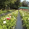 Crenshaw Farms Daylily Garden