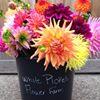 White Picket Flower Farm