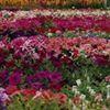 Zahm Greenhouses