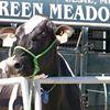 Green Meadow Farms