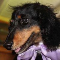 The Long Dog Retreat Dachshund Rescue