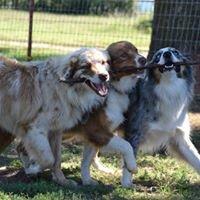 Windy G Farm Australian Shepherds