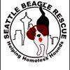 Seattle Beagle Rescue