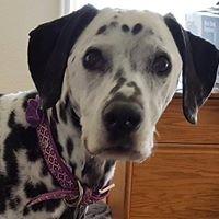 Dalmatian Rescue of Puget Sound