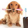 Belcrest Animal Clinic Inc.