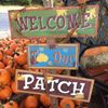 The Pumpkin Patch at Central Christian Church-Waco