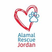 Canaan Dogs For Adoption - Alamal Rescue