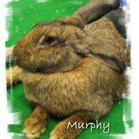 Heartland Rabbit Rescue