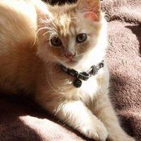 Adopt a Foster Pet