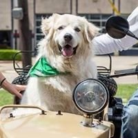 Great Pyrenees Rescue of Oklahoma