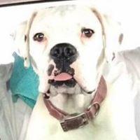 Taylor Co SPCA