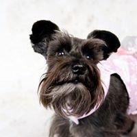 Yuppy Puppy Boutique LLC
