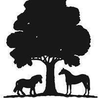 The Dorset Equine Rescue Inc.