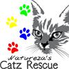 Natureza's Catz Rescue Sabie