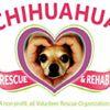 Chihuahua Rescue and Rehab