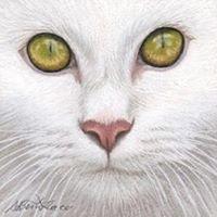Pawfect Pet Portraits