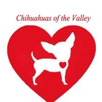 Chihuahuas Of The Valley