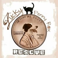 Lucky Penny Rox Rescue